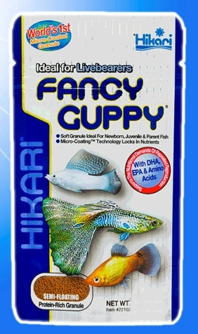 Fancy Guppy